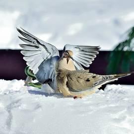 Terri Waselchuk - Winter Doves