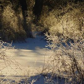 Dianne Cowen - Winter
