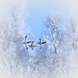 Movie Poster Prints - Winter Flight of the Geese