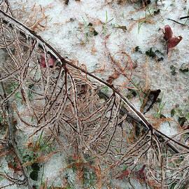 Winter Ground