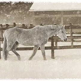 Cathy Kovarik - Winter Horse