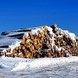 Olivier Le Queinec - Winter Logs