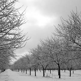 David T Wilkinson - Winter Orchard