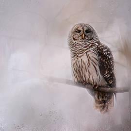 Jai Johnson - Winter Owl