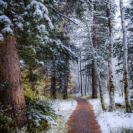 Winter Path - Cat Connor