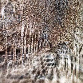 Don Zawadiwsky - Winter Path