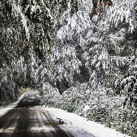 Mariola Bitner - Winter Pathway