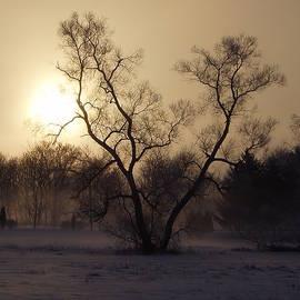 Toni Jackson - Winter