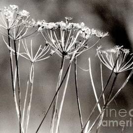 Jane Gatward - Winter Seed Heads