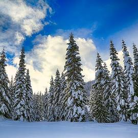 Lynn Hopwood - Winter sky on White Pass