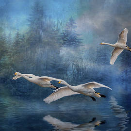 Brian Tarr - Winter Swans