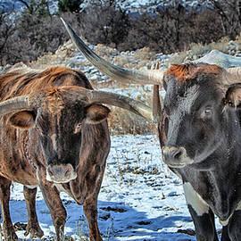 David Millenheft - Winter Texas Longhorns