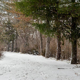 Robert Coffey - Winter Trail