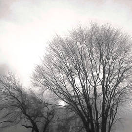 A Blackwell - Winter Trees Against a Winter Sky