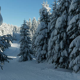 Andreas Levi - winter way in the Harz