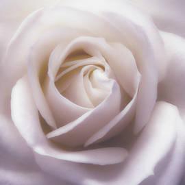 Johanna Hurmerinta - Winter White Rose 3
