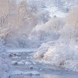 Winter Wonderland - Colorado - Darren White