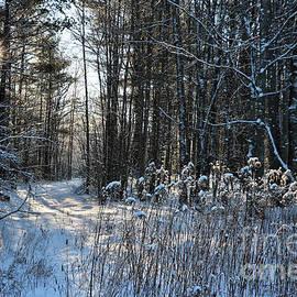 Sandra Huston - Winter Wonderland in Maine