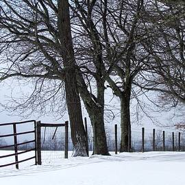 Beverly Canterbury - Winter