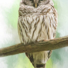 Jordan Blackstone - Wisdom Listens - Barred Owl Art