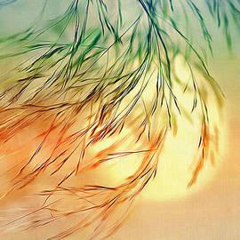 Nina Bradica - Wispy Sunset-0