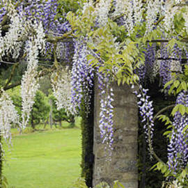 Tim Gainey - Wisteria Doorway