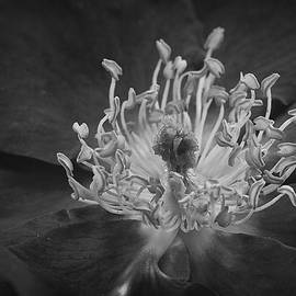 Morgan Wright - Within a Flower BW