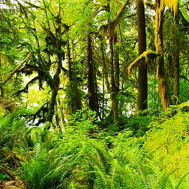 Jeff Swan - Within the Hoh National rain forest