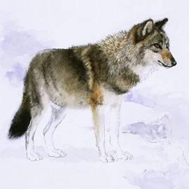 Attila Meszlenyi - Wolf
