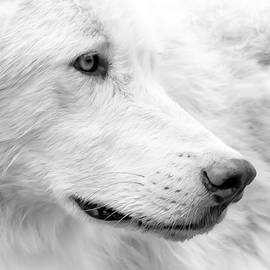 Athena Mckinzie - Wolf Close Up