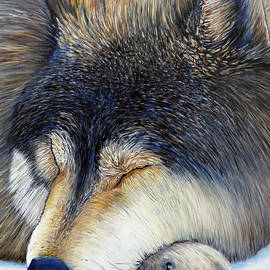 Brian  Commerford - Wolf Dreams