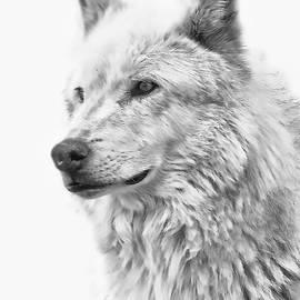 Athena Mckinzie - Wolf Portrait