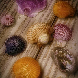 Wonderful Shell Still Life - Garry Gay