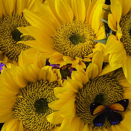 Wonderful Sunflowers - Garry Gay
