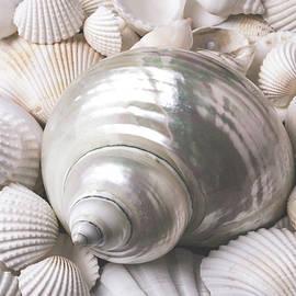 Wonderful White Seashells - Garry Gay