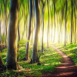 Jaffar Ali  Afzal - Wonderland forest