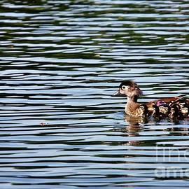 Chuck Hicks - Wood Duck Family