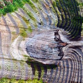 Tom Druin - Woodgrain...crosscut