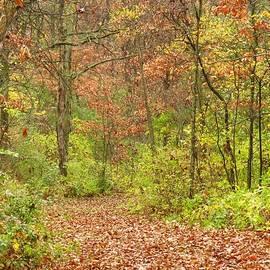 Lori Frisch - Woodland Beauty