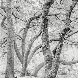 Woodland Oaks - Joseph Smith