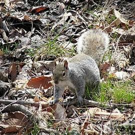 Elizabeth Duggan - Woodland Squirrel