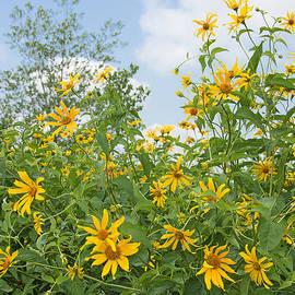 Regina Geoghan - Woodland Sunflowers
