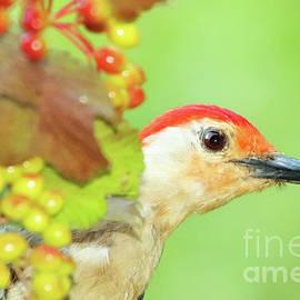 Max Allen - Woodpecker Peeking Out
