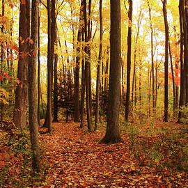 Debbie Oppermann - Woods In Autumn