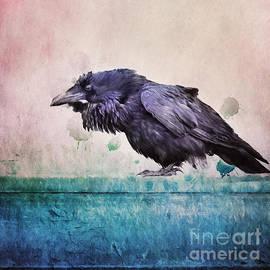 Words of a Raven - Priska Wettstein