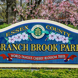 Allen Beatty - World Famous Cherry Blossom Trees  of Branch Brook Park