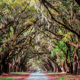 Joan Carroll - Wormsloe Plantation Oaks