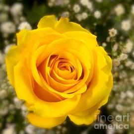 Wonju Hulse - Line up yellow
