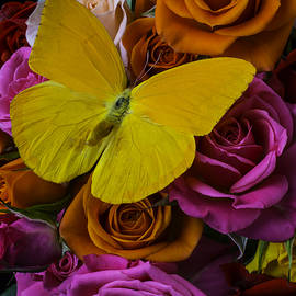 Yellow Butterfly On Roses - Garry Gay