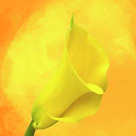 Cyndy Doty - Yellow Calla Lily